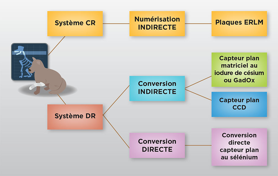 radionumerique_infographie.jpg