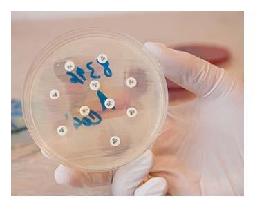 antibiogramme.jpg