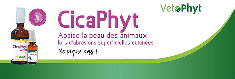 bandeau_accueil_coveto_780x265px.jpg