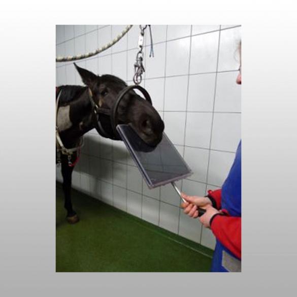 Mat riel v t rinaire protection pour radiographie - Canisette pour chien ...